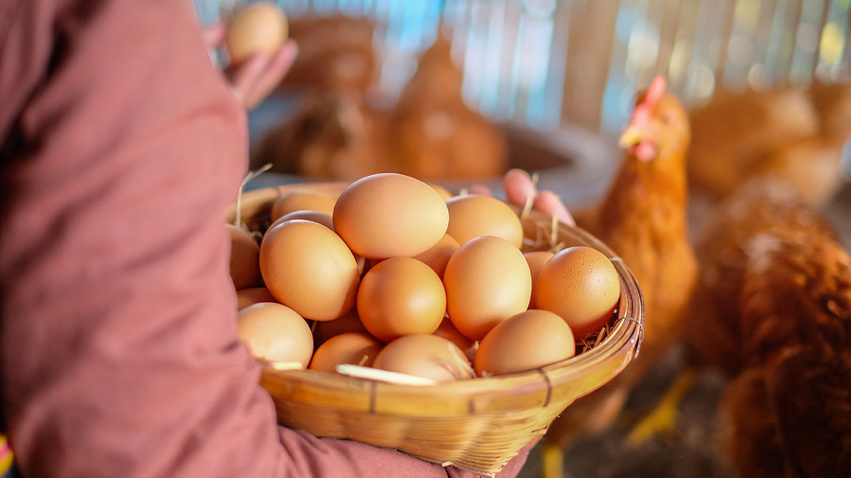 Free Range Organic Eggs