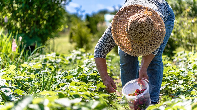 Farm Fresh  Organic Vegetables